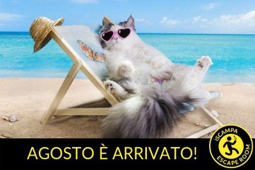 gattospiaggia